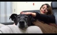 """""""Ho deciso! Prenderò un cane"""", la campagna informativa dell'Emilia-Romagna"""