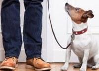 Coronavirus: gestire gli animali da compagnia se il padrone è in quarantena