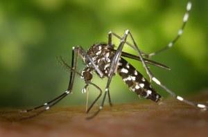 Lotta alle zanzare, dalla Regione 1 milione e 200mila euro per contrastarne la diffusione