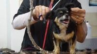 Può ripartire l'attività dei toelettatori per gli animali